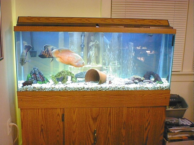 Fish also Tips For Fish Tank Maintenance together with RssFeed in addition  on oscar long tank 75 gallons